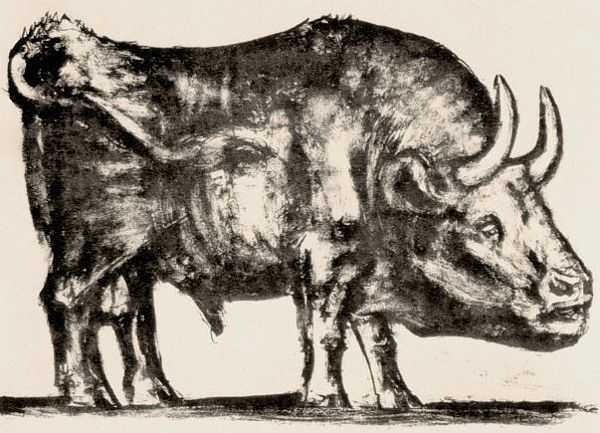 Le Taureau (tentang Picasso dan Bantengnya) 4 picasso,lukisan sketsa,lukisan banteng,contoh karya picasso,lukisan picasso dan maknanya