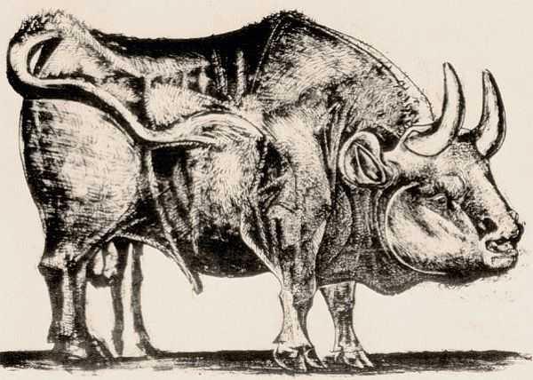 Le Taureau (tentang Picasso dan Bantengnya) 6 picasso