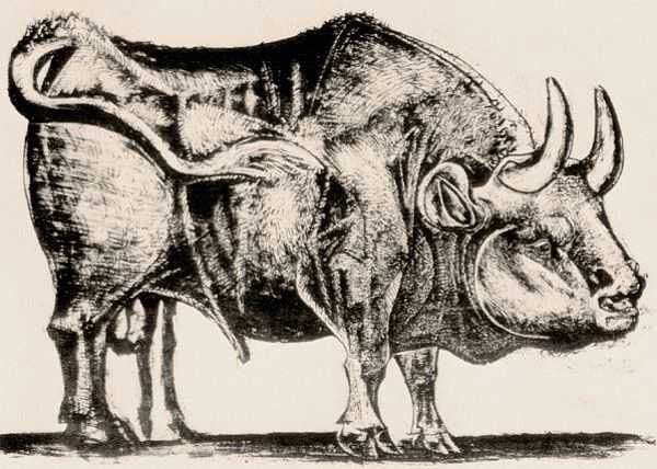Le Taureau (tentang Picasso dan Bantengnya) 6 picasso,lukisan sketsa,lukisan banteng,contoh karya picasso,lukisan picasso dan maknanya